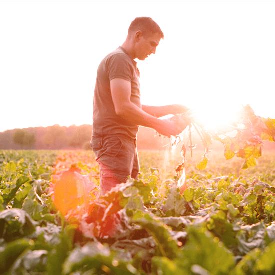 Why cooking seasonally isn't just a health fad