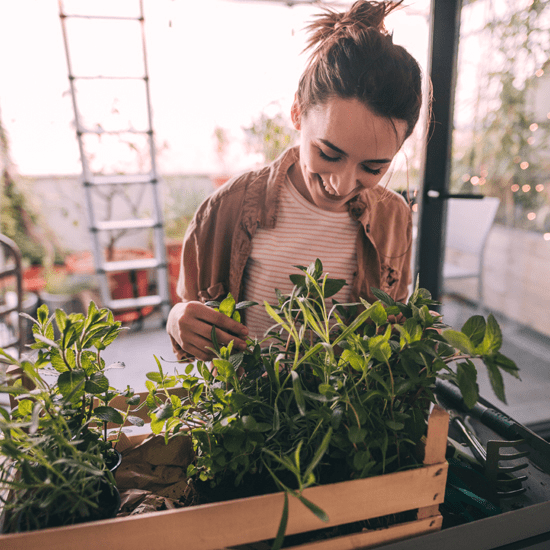 How does your vegetable garden grow?